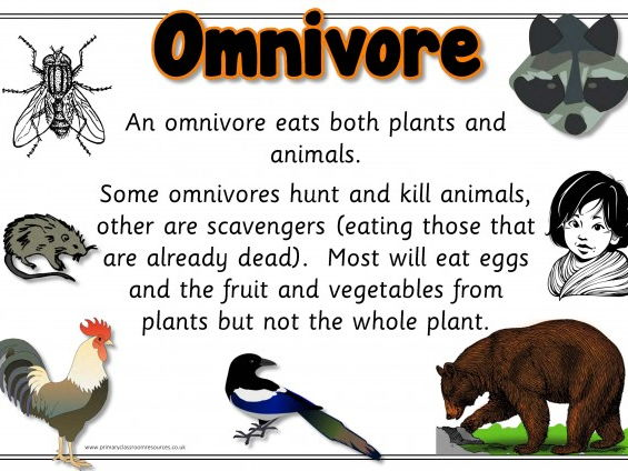 what is an example of omnivore