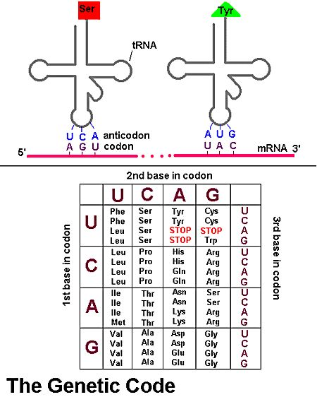 dna to rna code example